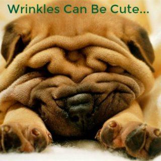 Wrinkles 5 320x320